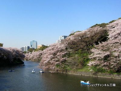 千鳥ヶ淵の桜とボート 2011年4月