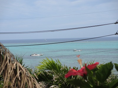 沖縄の海とハイビスカス(電線邪魔;)