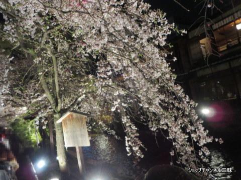 京都白川の夜桜ライトアップ2016春