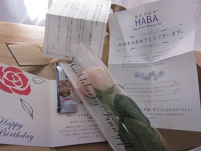 HABAから届いたバースデープレゼントのバラ♪