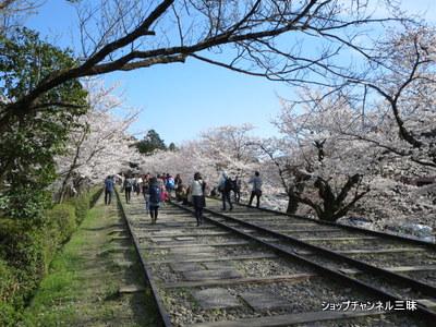 京都蹴上(けあげ)インクラインの桜2014春
