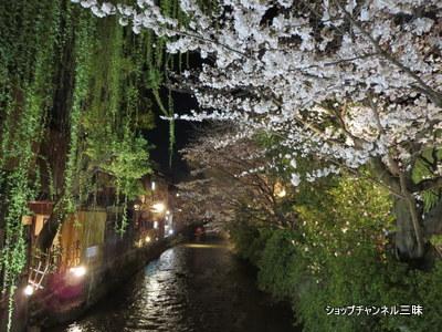 京都白川の夜桜ライトアップ2014春