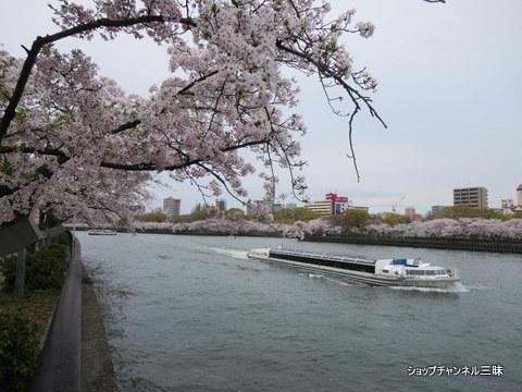 大川沿いのソメイヨシノ桜宮~天満橋