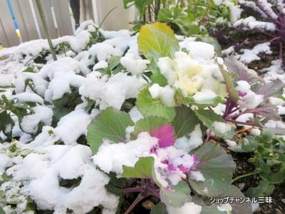 2015年1月2日雪